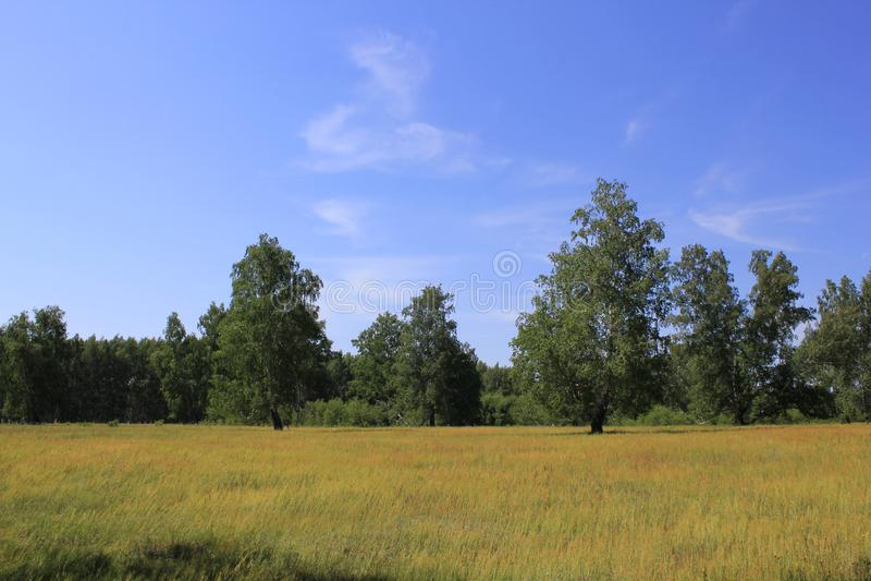 Lato piękny krajobraz zdjęcia stock