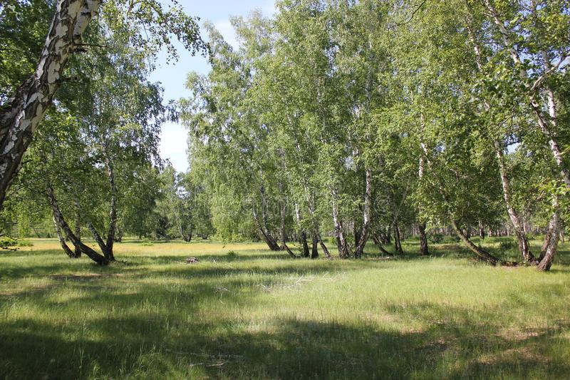 Lato piękny krajobraz zdjęcie stock