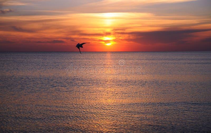 Lato piękny zachód słońca na plaży zdjęcia stock