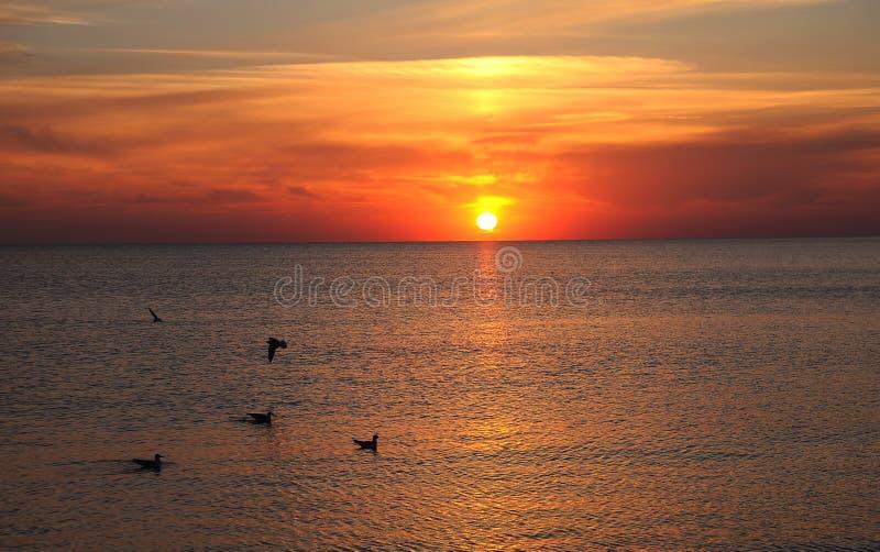 Lato piękny zachód słońca na plaży zdjęcie royalty free