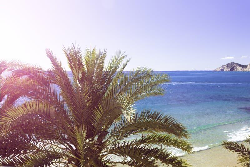 Lato plaża - drzewko palmowe, skała, biały piasek, woda morska, tropikalna natura obraz royalty free