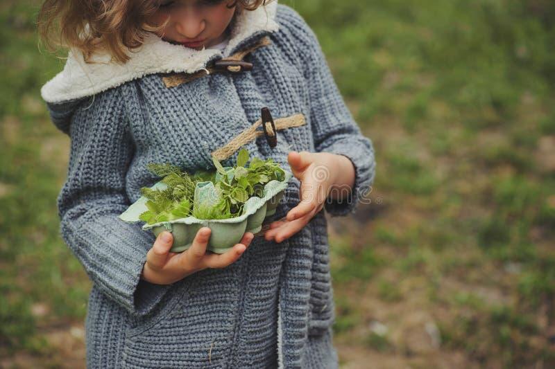Lato plenerowa aktywność dla dzieciaków - śmieciarza polowanie, liście sortuje w jajecznym pudełku fotografia royalty free