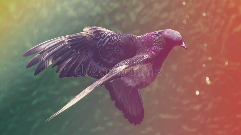 Lato ptak obrazy stock