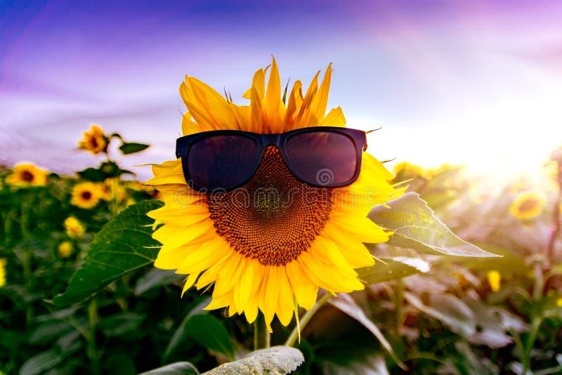 Lato słonecznikowy strój w czarnych okularach przeciwsłonecznych Żółty słonecznik na niebieskim niebie i słoneczniku obrazy stock
