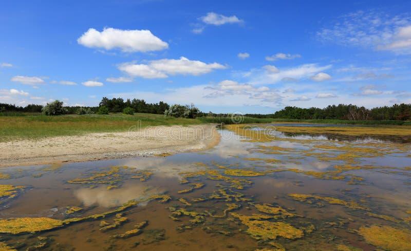 Lato scena na jeziorze zdjęcia stock