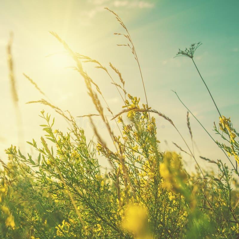 Lato sen Abstrakcjonistyczni naturalni tła z dziką trawą fotografia stock