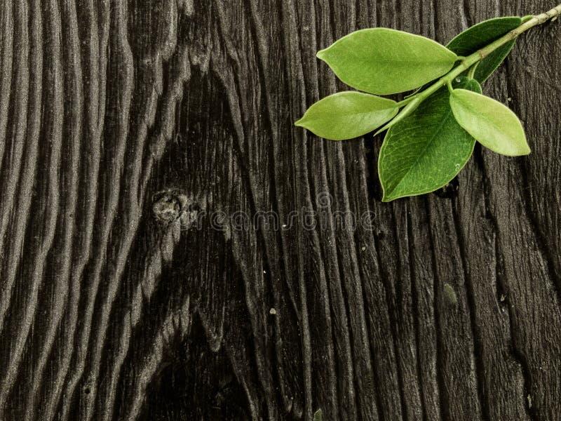 Lato Sukumvit dell'albero fotografie stock