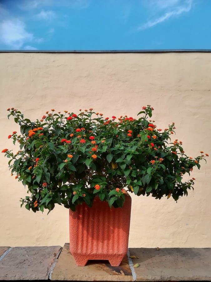 Lato tarasu kwiatu deco i projekt zdjęcia royalty free