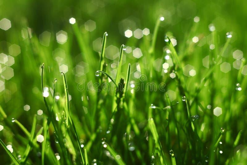 Lato trawy tło z rosą obraz royalty free