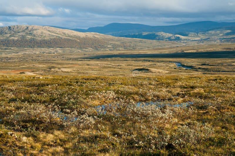 lato tundra obrazy royalty free