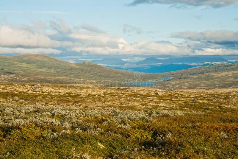 Lato tundra zdjęcie royalty free