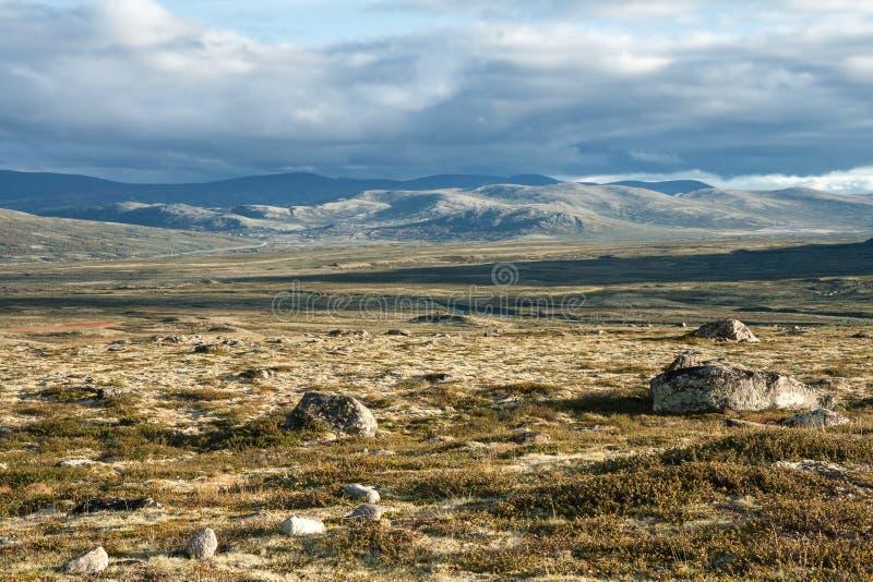 Lato tundra fotografia stock