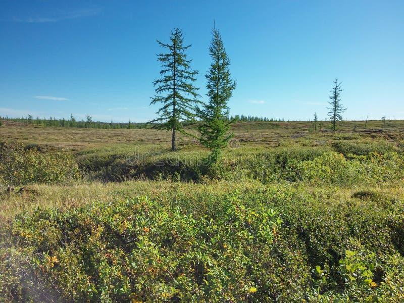 Lato w Arktycznej strefie zdjęcia royalty free