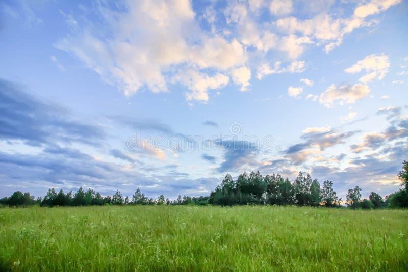 Lato w wsi Krajobrazowy widok z polem, lasem i niebieskim niebem z chmurami w pogodnym lecie zieleni, obraz stock
