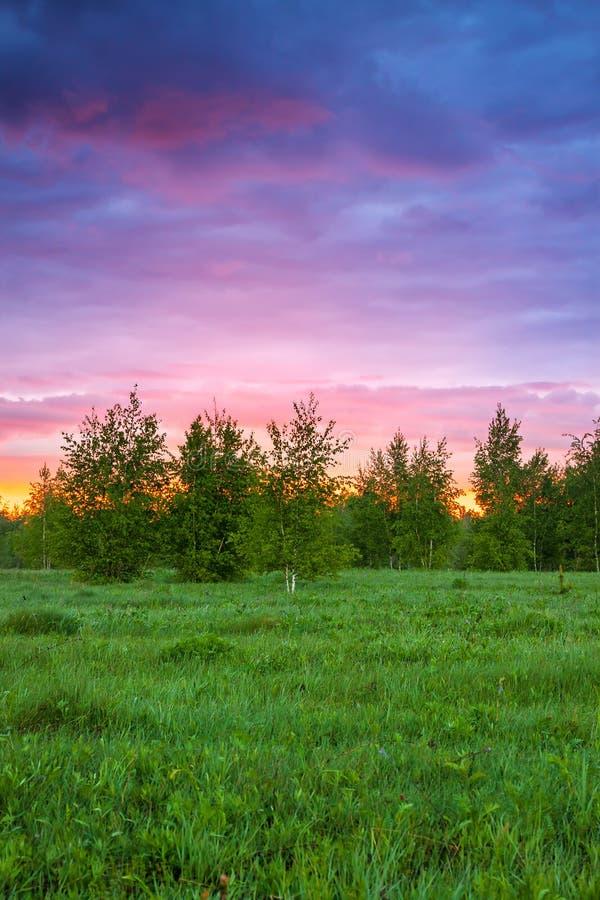 Lato wiejski krajobraz z lasem, łąką i wschodem słońca, obraz stock