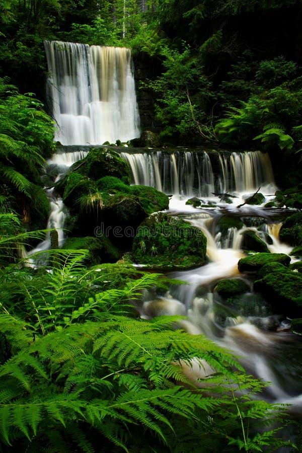 lato wodospadu zdjęcia stock