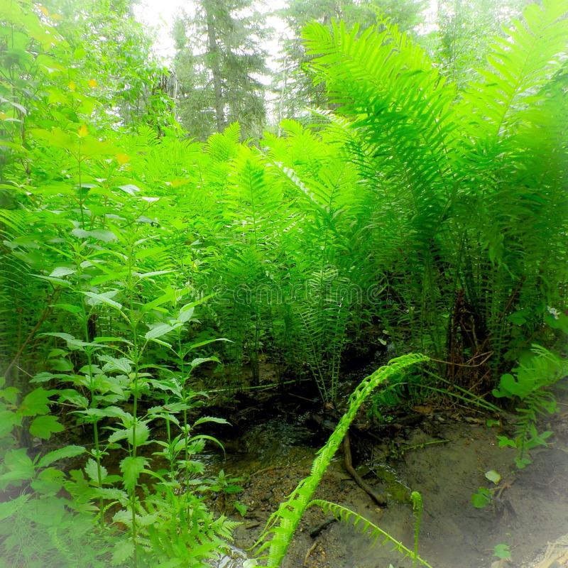 Lato zielone paprocie obraz royalty free