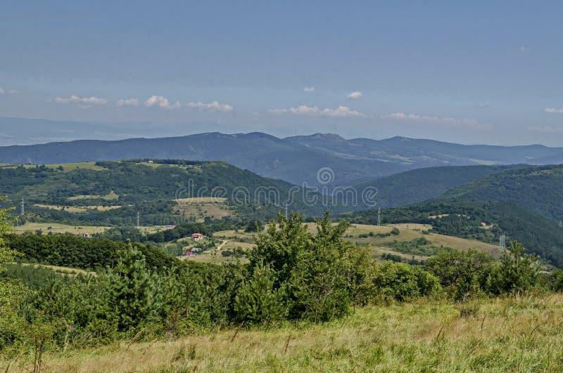 Lato zielony las, pojedynczy drzewa w świeżej haliźnie z różną trawą kwitnie wildflower, Vitosha góra zdjęcia stock