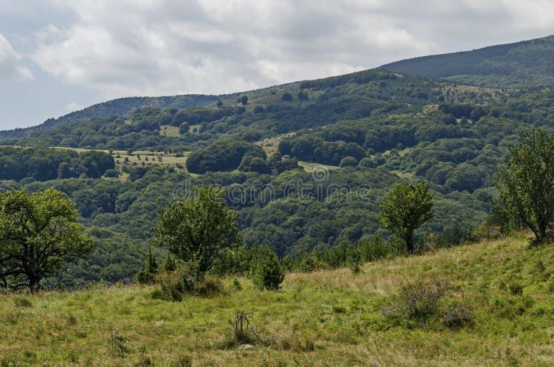 Lato zielony las, pojedynczy drzewa w świeżej haliźnie z różną trawą kwitnie wildflower, Vitosha góra obrazy royalty free