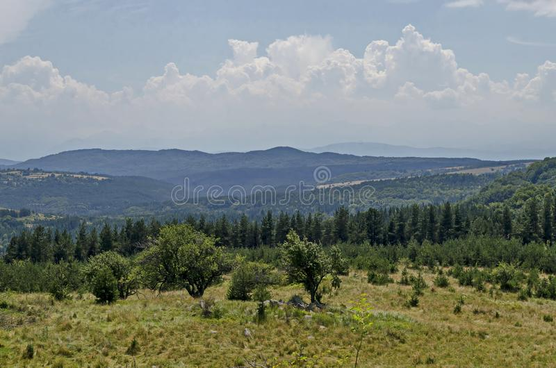 Lato zielony las, pojedynczy drzewa w świeżej haliźnie z różną trawą kwitnie wildflower, Vitosha góra obraz royalty free