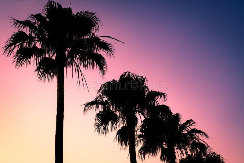 Lato zmierzchu tła wizerunek Retro Stylowi drzewka palmowe obraz royalty free