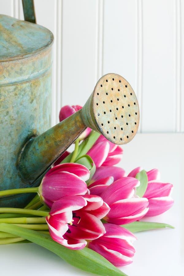Latta di innaffiatura con i fiori fotografie stock