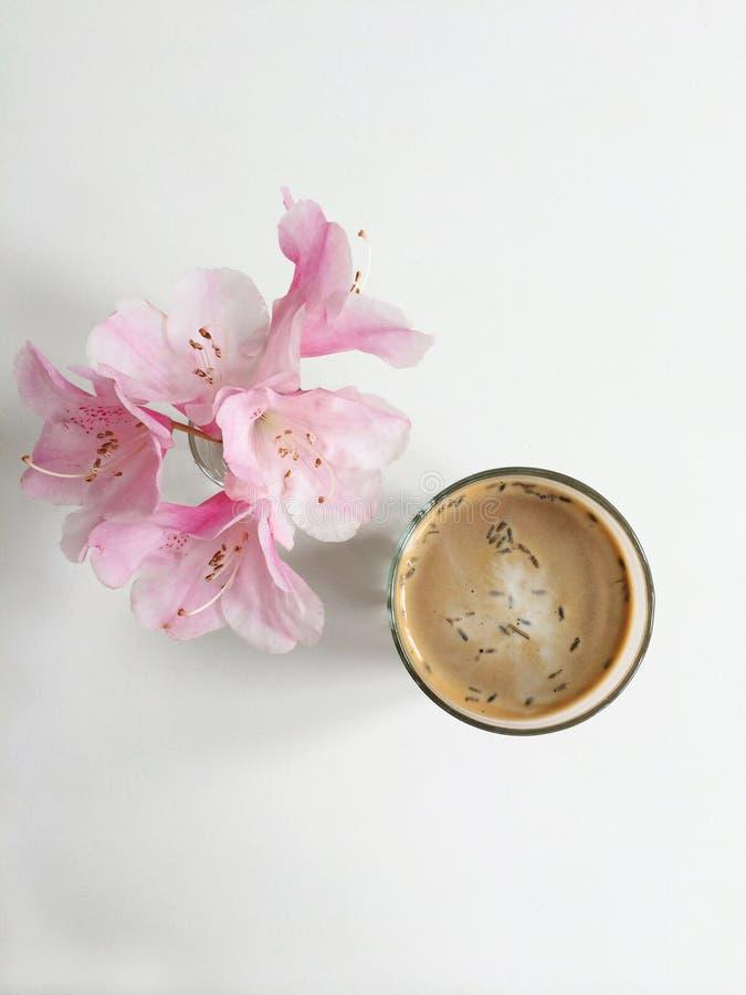 Latte da alfazema fotos de stock