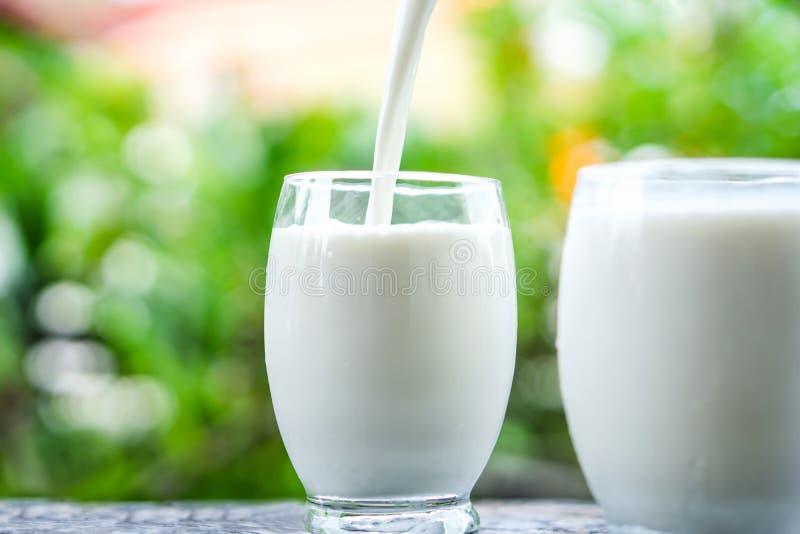 Latte di versamento su bicchiere sopra il fondo di mattina di luce solare della natura fotografie stock libere da diritti