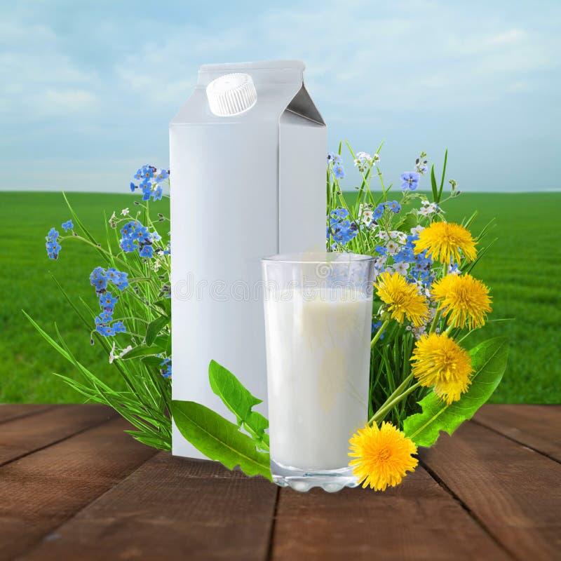 Latte e giacimento soleggiato della molla fotografie stock libere da diritti