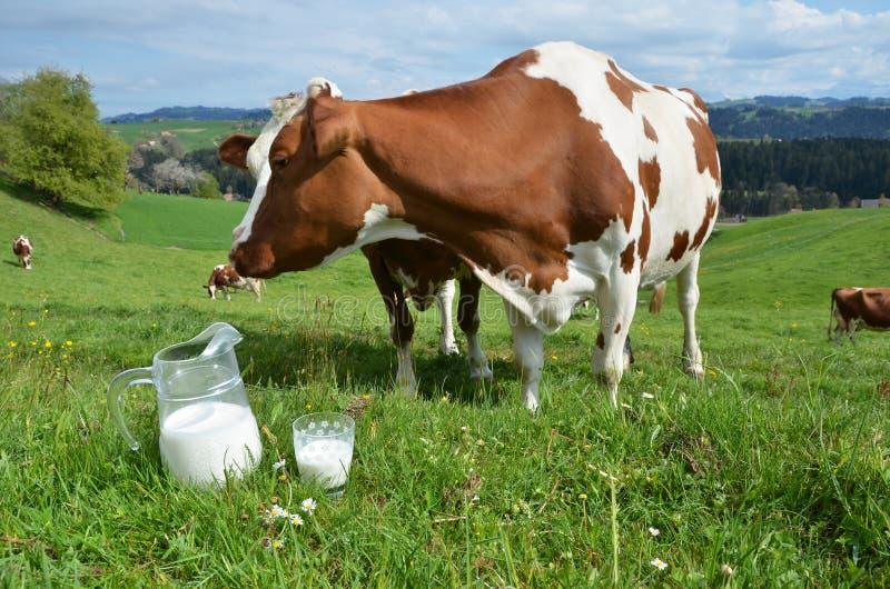 Latte e mucche immagini stock