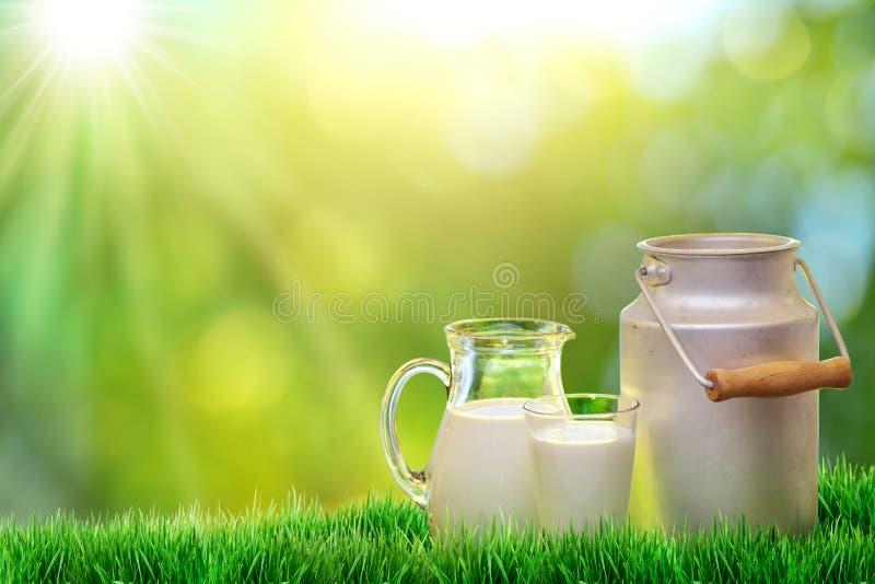 Latte organico fresco immagine stock