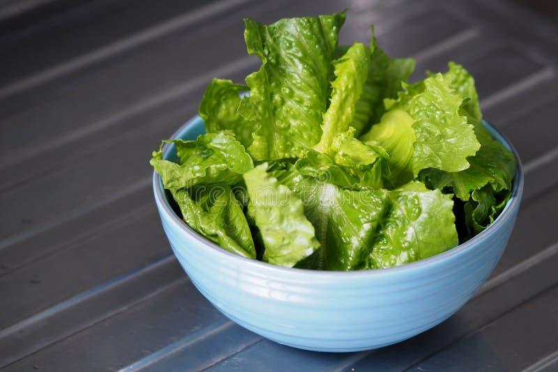 Lattich-Römersalat des grünen Salats geschnitten lizenzfreies stockfoto