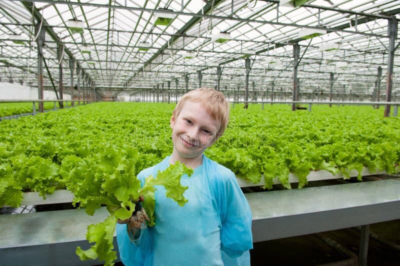 Giovane lattuga della tenuta del ragazzo in serra fotografia stock