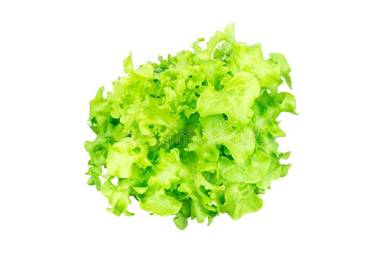 lattughe verdi fresche della quercia fotografia stock libera da diritti