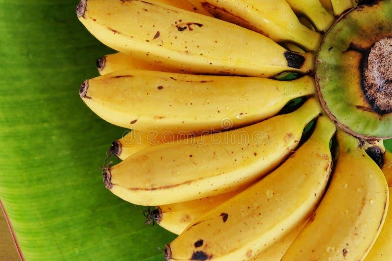 Latundan banana. stock photo