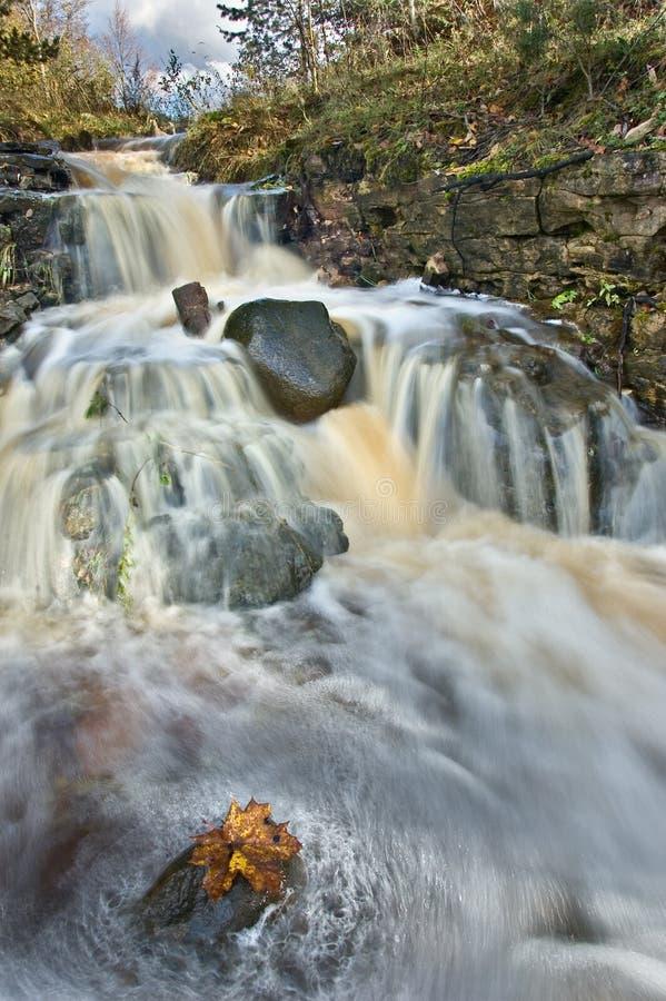 latvian autumn forest river - photo #17