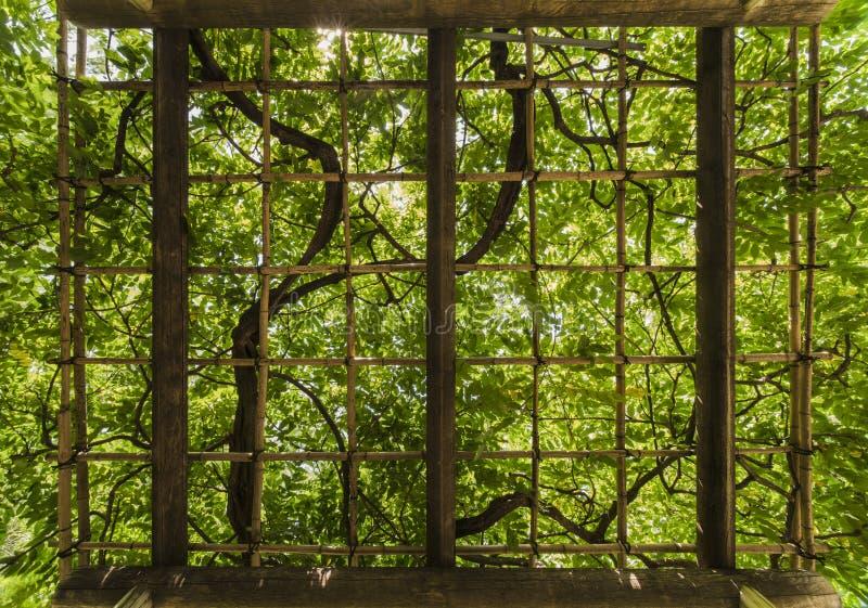 Latwerk de waarvan bladeren van heldergroen met stralen van s gestippeld zijn stock fotografie