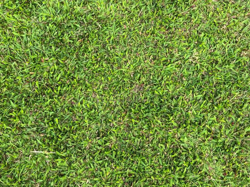 Laub auf dem Gras stockfotografie