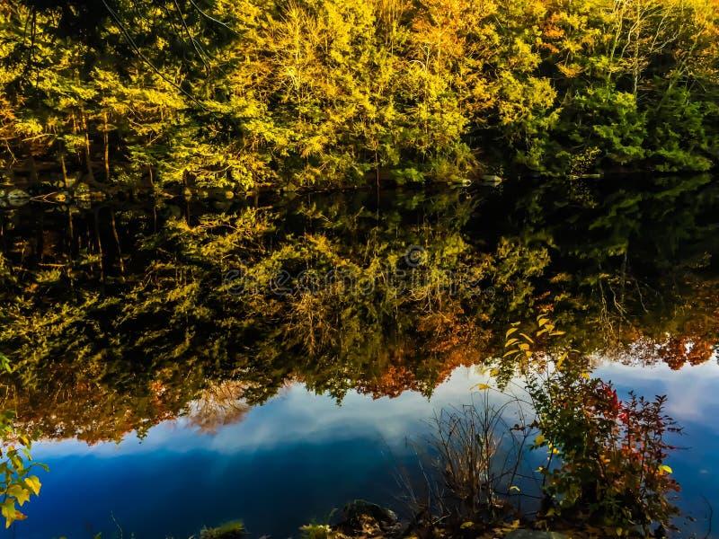 Laub bei Burr Pond State Park stockbild