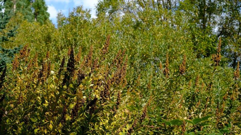 Laub in frühen West-Hylebos Sumpfgebieten Autumn Still Green In Thes parken, Bundesweise, Washington, Vereinigte Staaten stockfoto