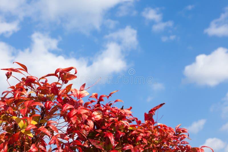 Laub und blauer Himmel stockfotos