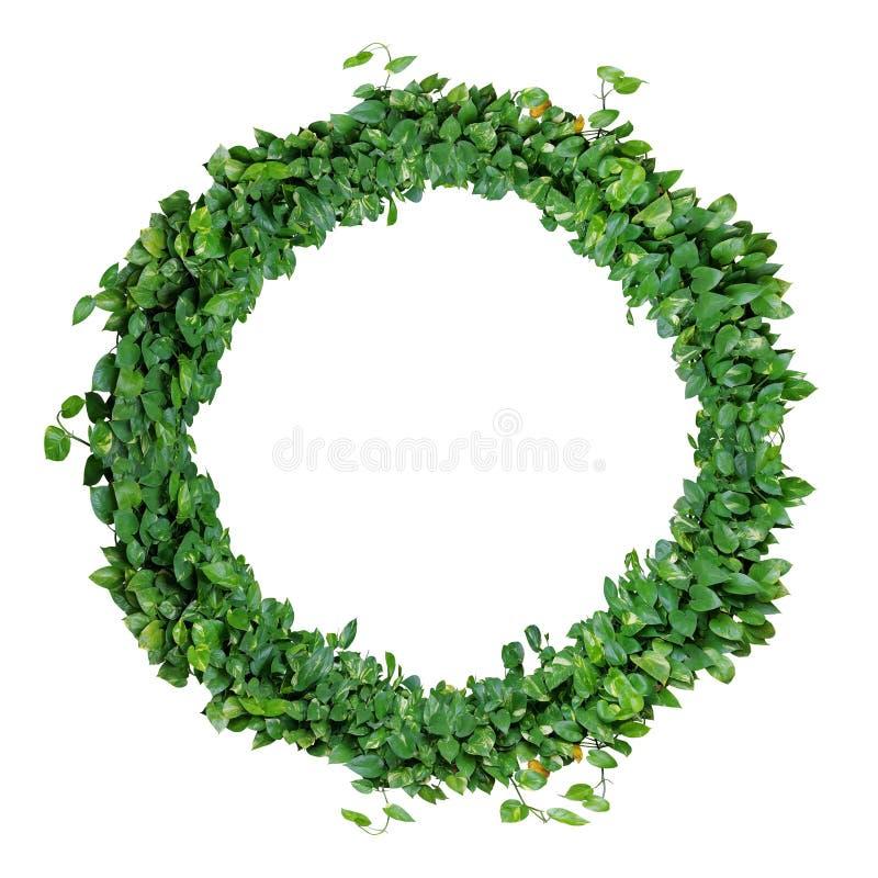 Laubalphabetbuchstabe O, natürliche grüne Blätter winden, Efeu wrea lizenzfreie stockfotografie