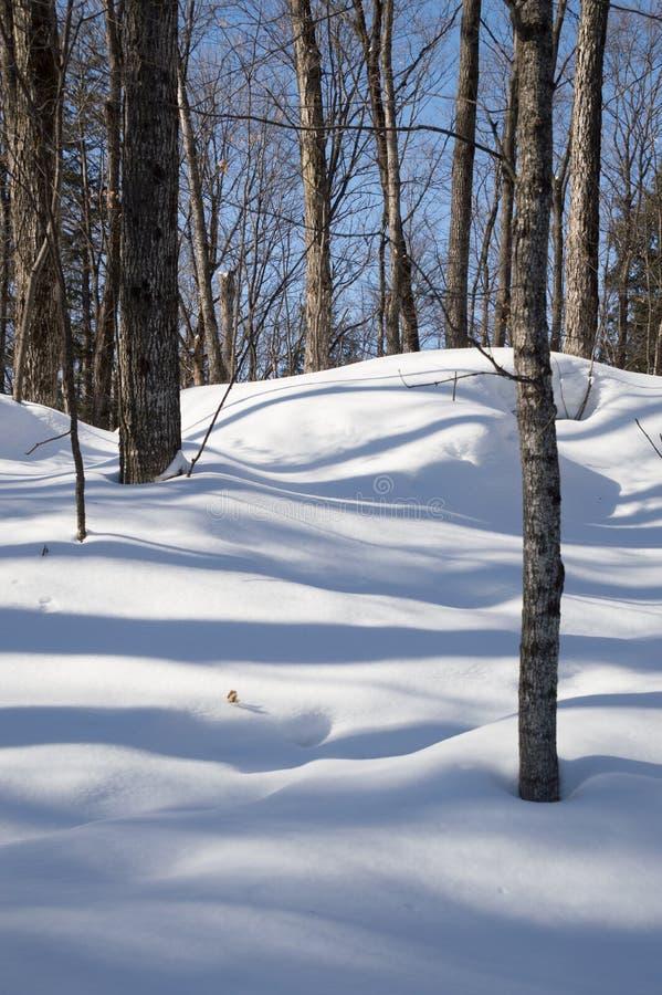Laubbäume, die blaue Schatten im Schnee werfen stockbilder