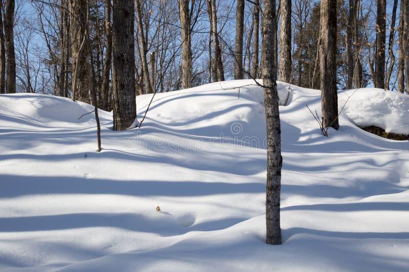 Laubbäume, die blaue Schatten im Schnee werfen lizenzfreies stockbild