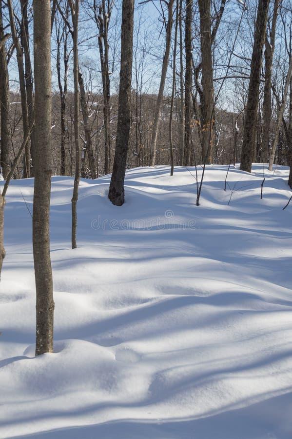 Laubbäume, die blaue Schatten im Schnee werfen lizenzfreie stockfotografie