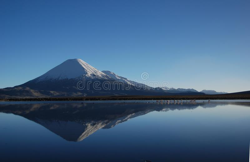 Lauca national Park - Chile stock image