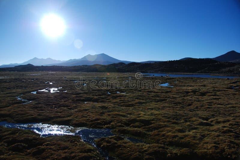 Lauca national Park - Chile stock photos