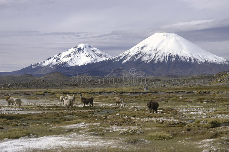 Lauca park narodowy Chile obrazy royalty free