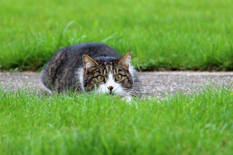 Lauernde Katze