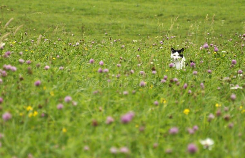 Lauernde Katze Auf Der Sommerwiese Lizenzfreie Stockfotografie